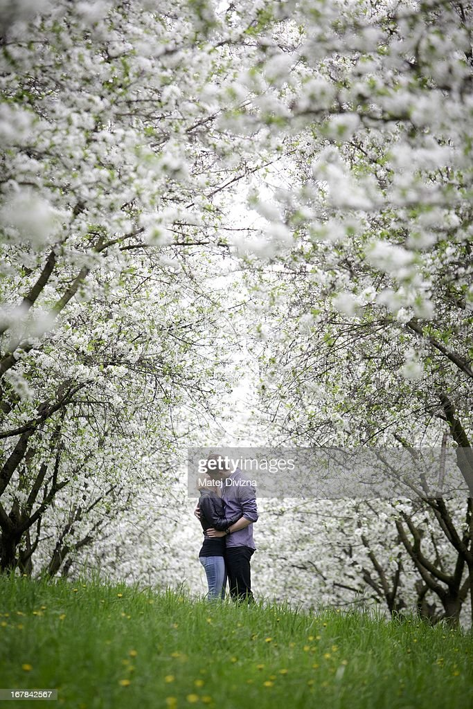 A young couple kisses under a cherry blossom tree as part of Czech May Day tradition on the Petrin Hill on May 1, 2013 in Prague, Czech Republic. In addition to celebrations across the globe of the beginning of spring throughout the world, workers are gathering in city centers to annually vent their grievances and support their worker's unions.