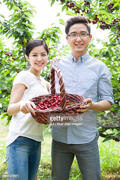 Young couple picking cherries in orchard