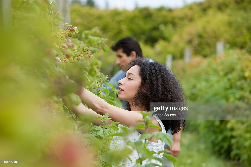 Young couple picking fruit on farm