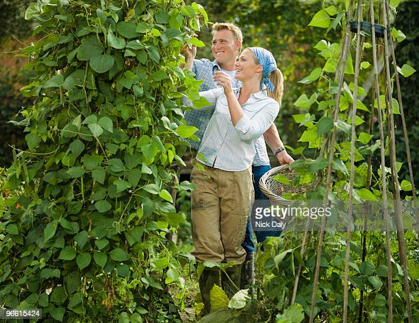 Young couple pruning a bean plant