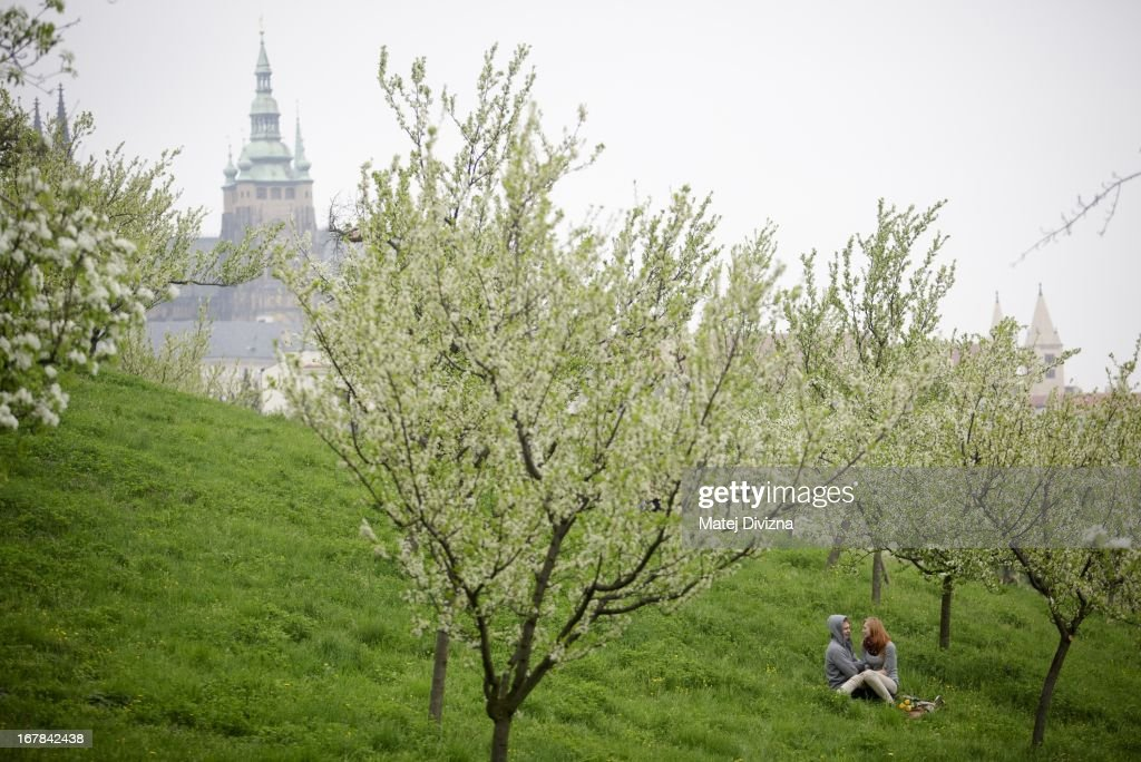 A young couple sit under a cherry blossum tree on the Petrin Hill on May 1, 2013 in Prague, Czech Republic. In addition to celebrations across the globe of the beginning of spring throughout the world, workers are gathering in city centers to annually vent their grievances and support their worker's unions.