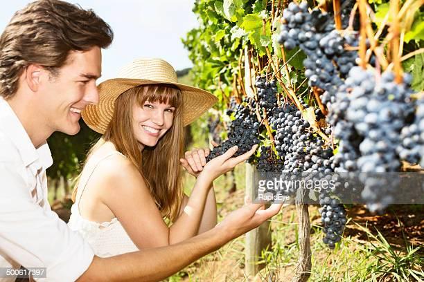 Junges Paar Lächeln über reichlich schwarzem roten Wein Trauben in vineyard