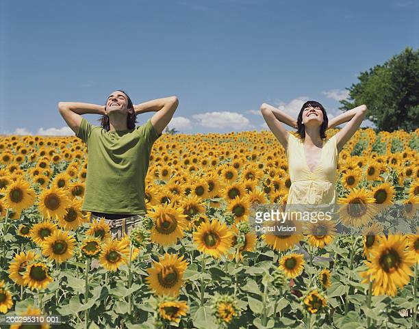 Young couple standing in sunflower field, hands behind heads