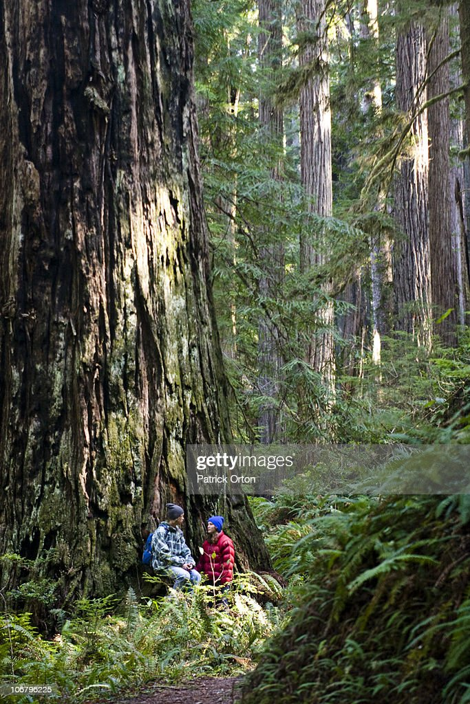 A young couple talk while sitting under a massive redwood in California.