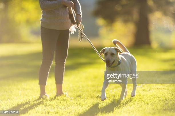 Young couple walking dog on beautiful summer evening