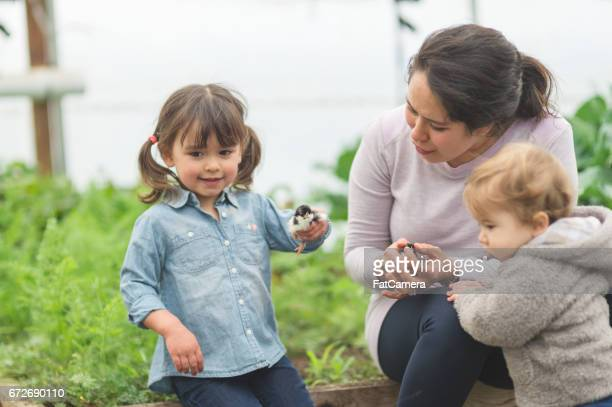 Young ethnic girl holds up a cute young chick to show her mom in the garden outside