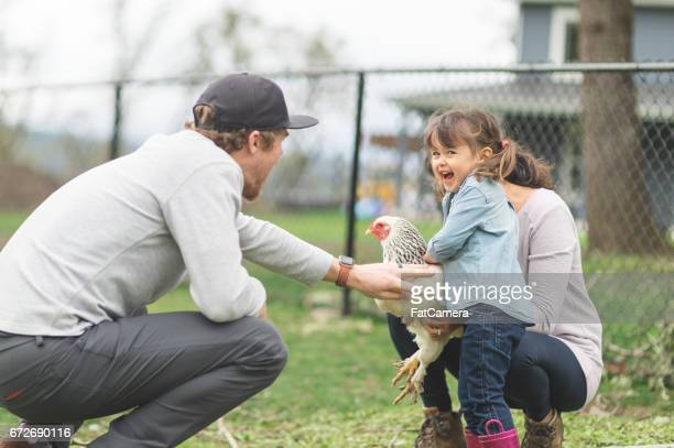 Young ethnic girl shows off her full-grown chicken to a family friend