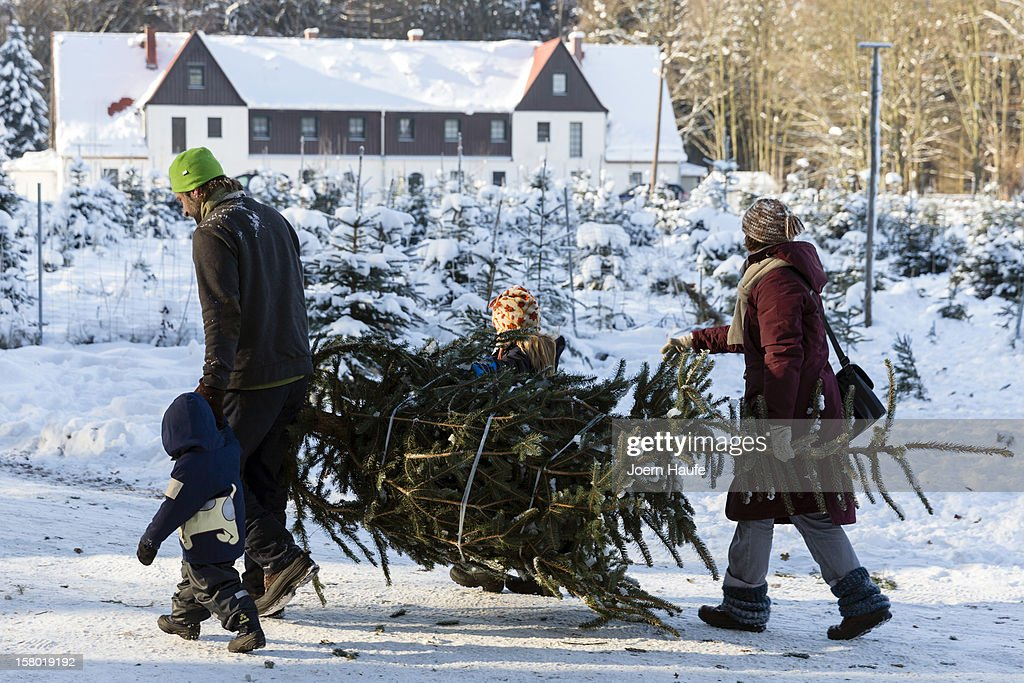A young family carry a Christmas tree they chose and cut down themselves in a forest on December 8, 2012 in Fischbach, Germany. Forestry officials in the state of Saxony officially opened the 2012 Christmas tree season for people who want to retrieve their tree from designated forests rather than just buying it readily cut.