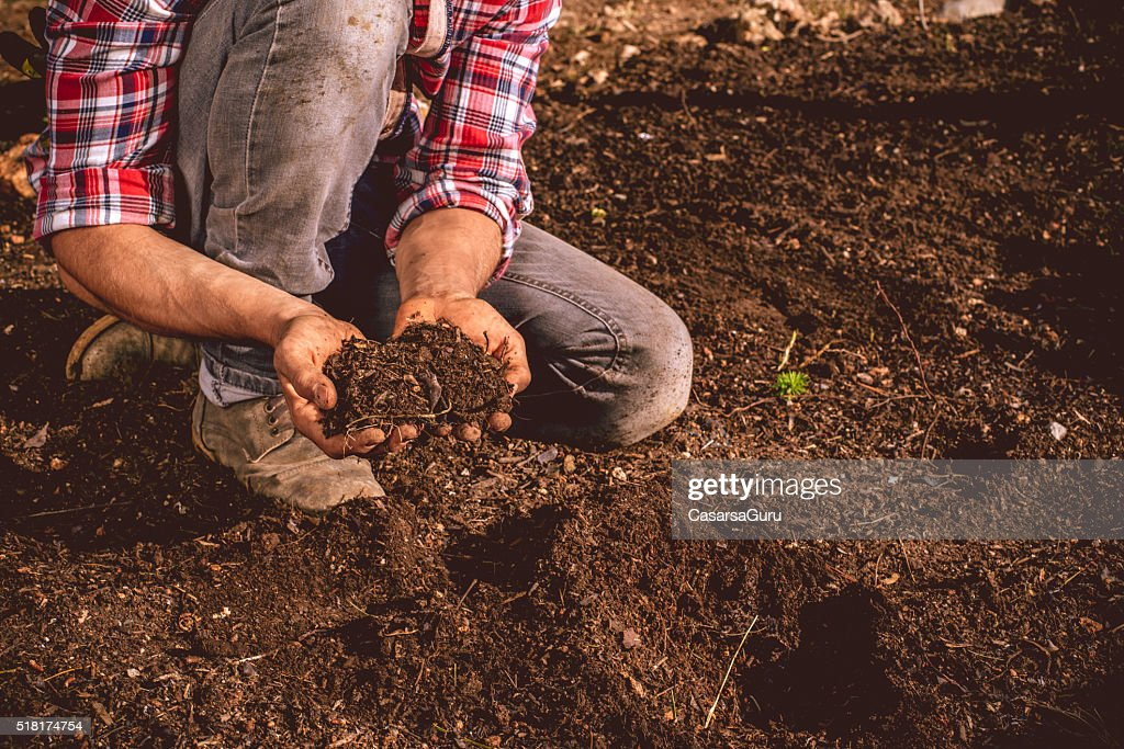 Young Farmer checking the soil on his field : Stock Photo