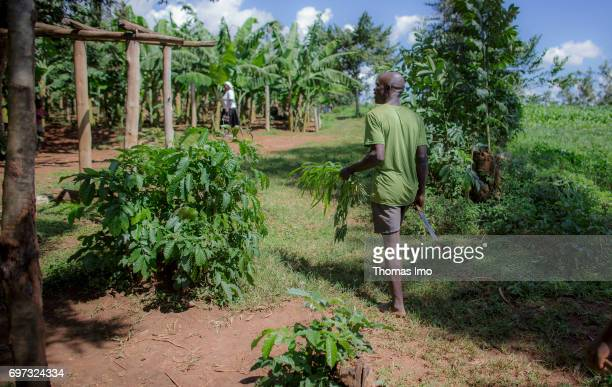 Young farmer on his field in Kakamega County on May 16 2017 in Kakamega County Kenya