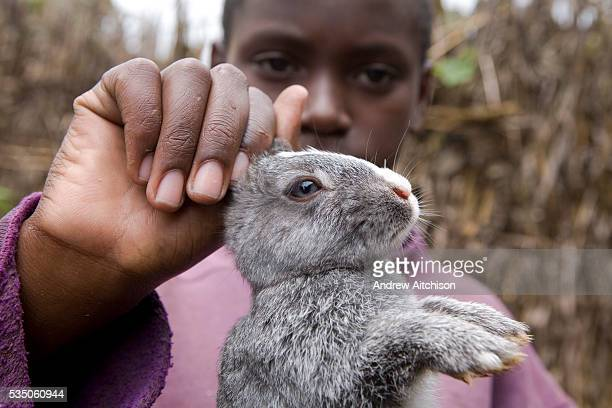 A young farmer shows off one of his rabbits at Mable Mutabazi's farm in Uganda Rabbits are bred for meat Mable is a trainee farmer with the Kulika...