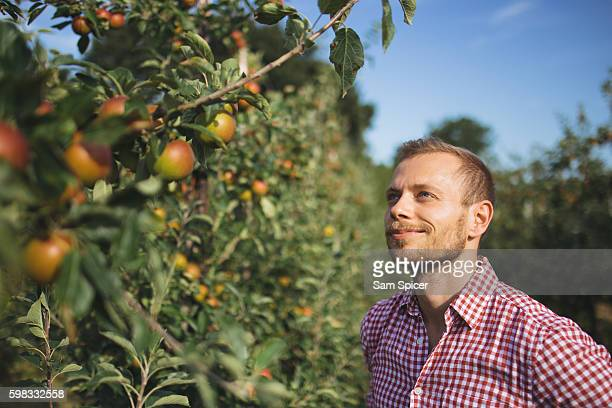 Young Farmer standing in Apple orchard