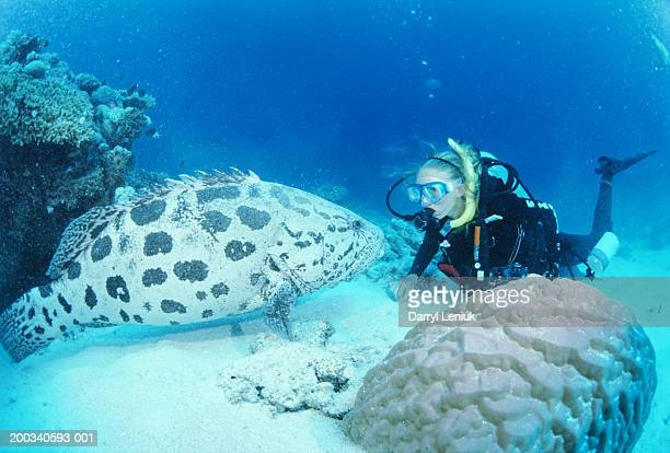 Young female diver and potato cod face to face, underwater view