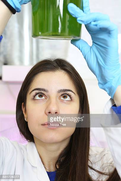 Young female engineer looking at micro algae