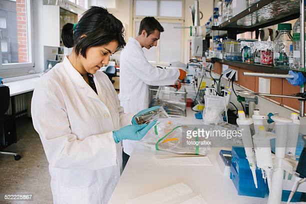 young female researcher in a lab analyses a dna-test