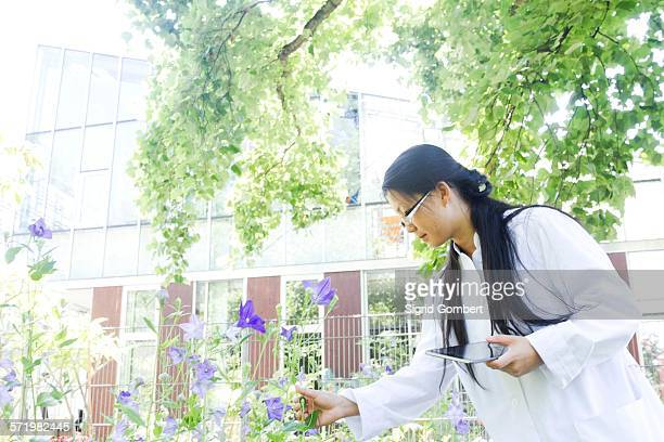 Young female scientist with digital tablet outside laboratory selecting specimen plants