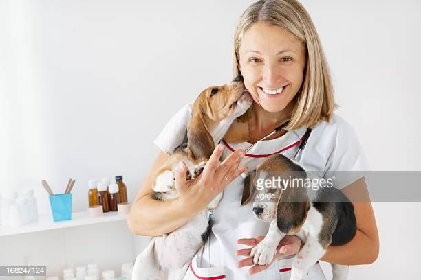Jovem fêmea veterinário Abraçar Cute Little cachorros, Beagles