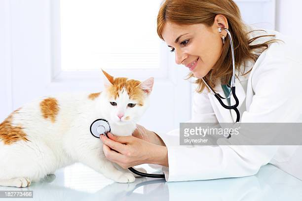 Young female veterinary caring of a cute cat