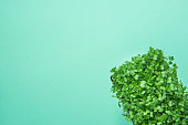 Young Fresh Green Sprouts of Potted Water Cress on Pastel Turquoise Background. Gardening Healthy Plant Based Diet Food Garnish Concept. Minimalist Trendy Style. Top View Corner Position