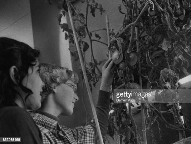 Young Gardeners Examine Their Crop Denise Greener left and Pamela Palmer both fifthgrade pupils at Schmitt Elementary School 1830 S Vallejo St look...