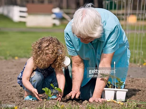 Jeune femme et grand-mère dans le jardin en plantant des fraises