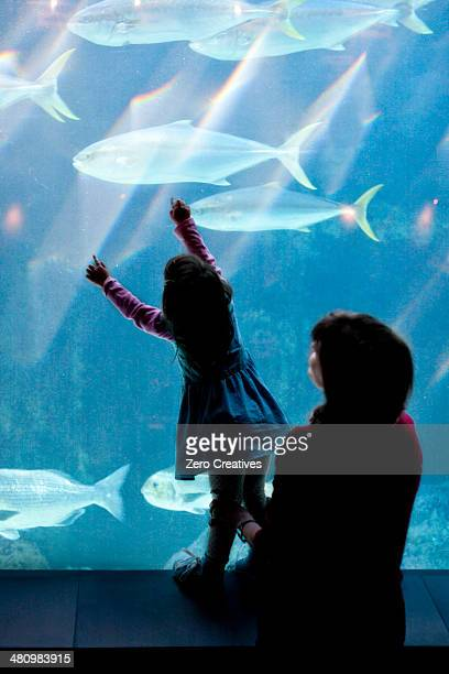 Young girl and grandmother looking at fish in aquarium