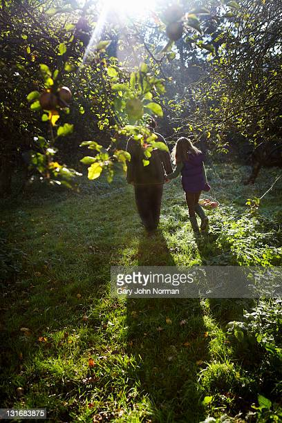 Young girl and mother gather apples