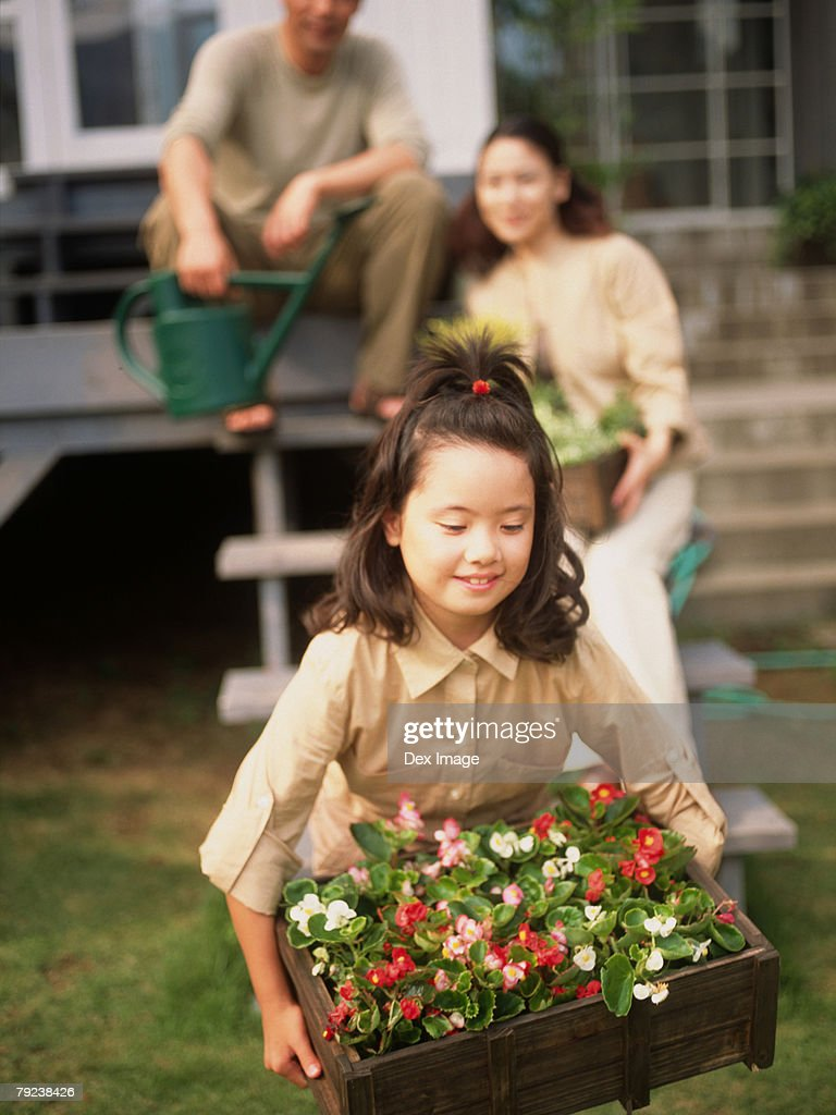 Young girl carrying a crate of plants, parents in the background : Stock Photo