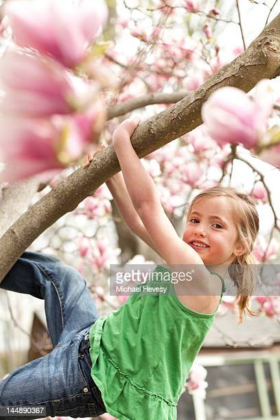 A young girl climbing in a magnolia tree