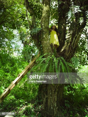 Young girl climbing in tree : Stock Photo