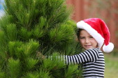 A young girl collects her Christmas tree to tak home on December 16 2013 in Melbourne Australia