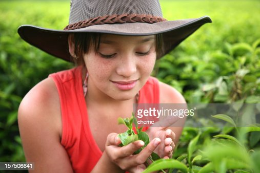 Young girl cups leaves in a green, growing tea field