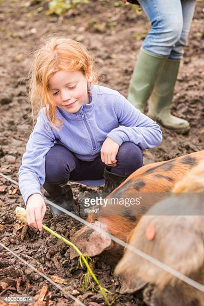 Young Girl Feeding a Pig on an Organic Farm