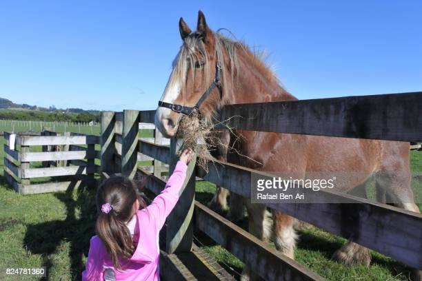 Young girl feeds a horse