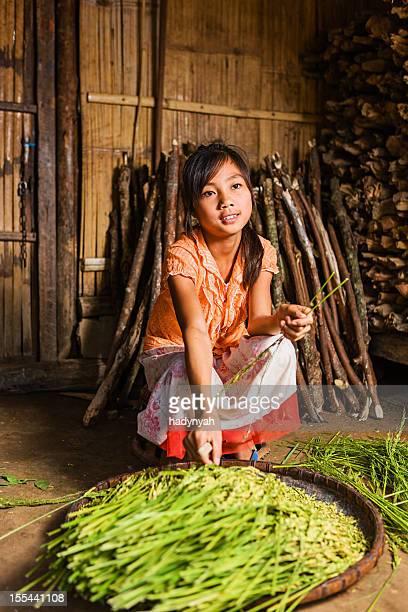 Junges Mädchen von der Lantan hill tribe ernten Reis