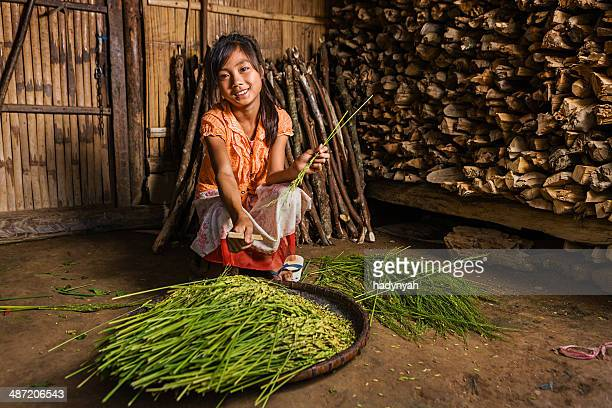 Young girl from the Lantan hill tribe harvesting a rice