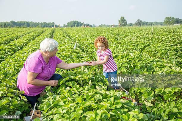 Young Girl & Oma pflücken Erdbeeren im Feld