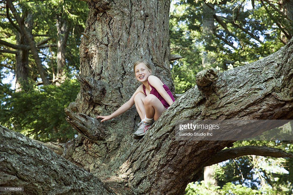 Young girl in a large tree : Stock Photo