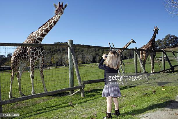 Young girl looking at giraffess using binoculars