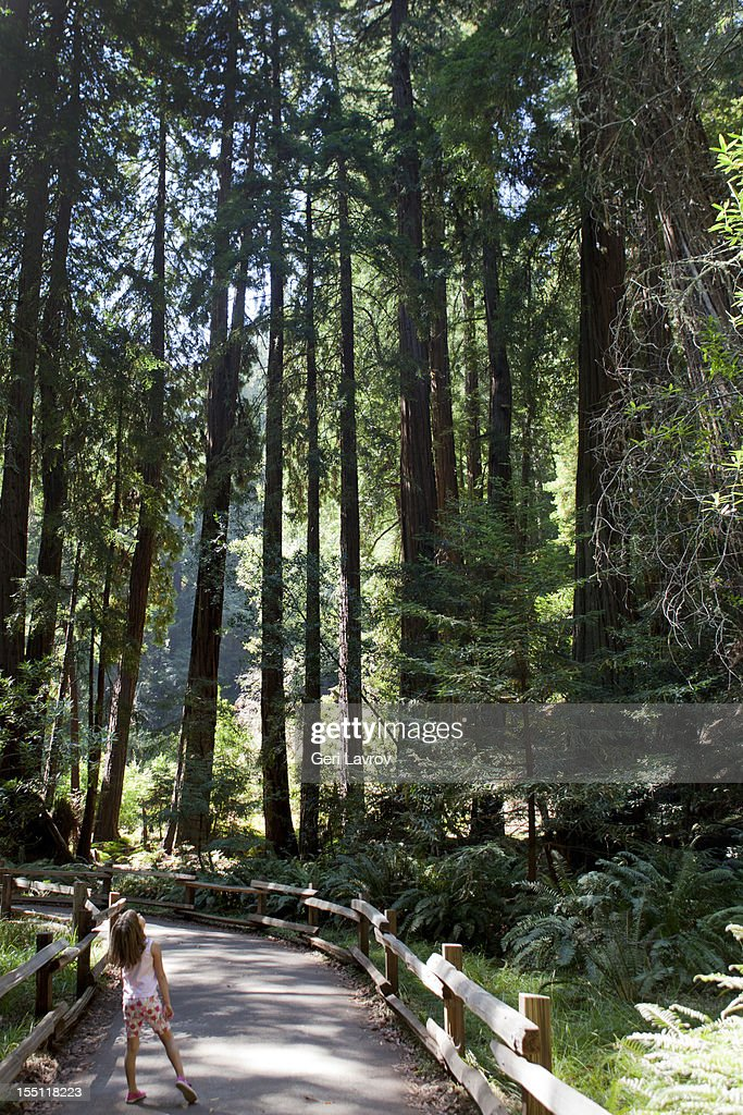 Young girl looking up at redwood trees : Stock Photo