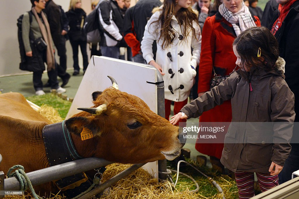 A young girl pets a cow at the International Agriculture Fair of Paris at the Porte de Versailles exhibition center, on February 23, 2013 in Paris.