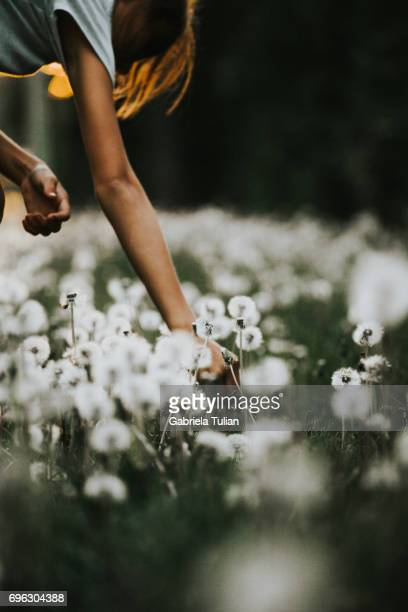 Young girl picking a dandelion
