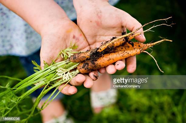 Junges Mädchen pflücken frische Karotten auf den Garten