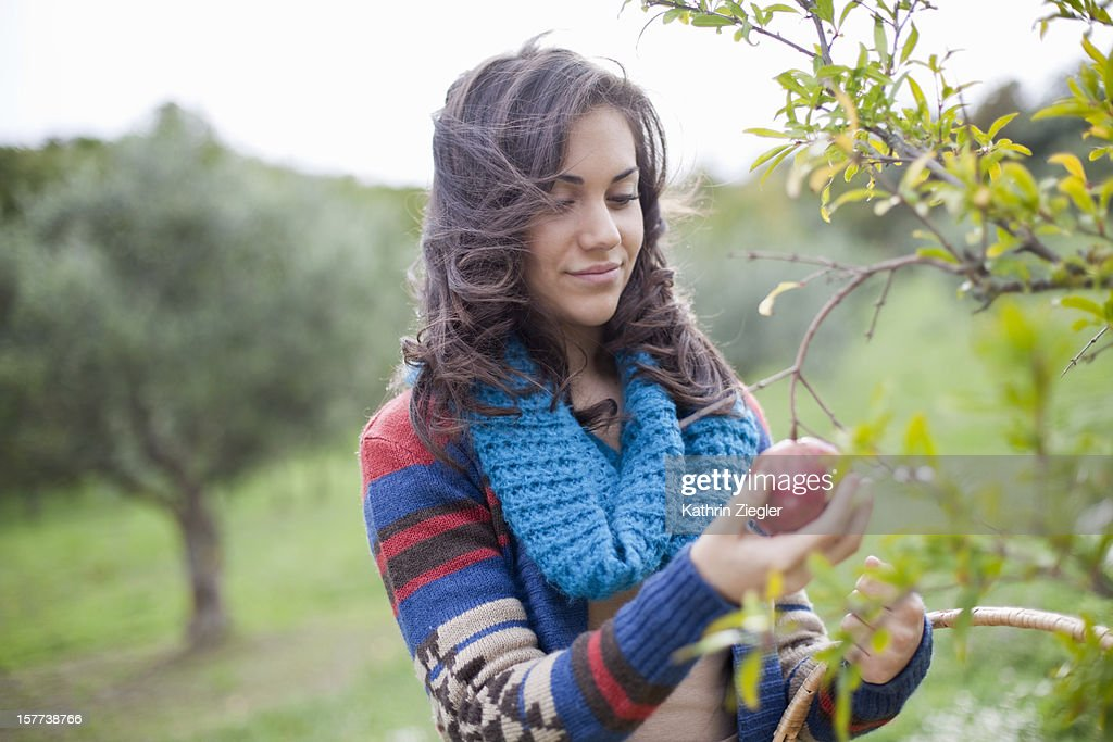 young girl picking pomegranate from tree : Stock Photo