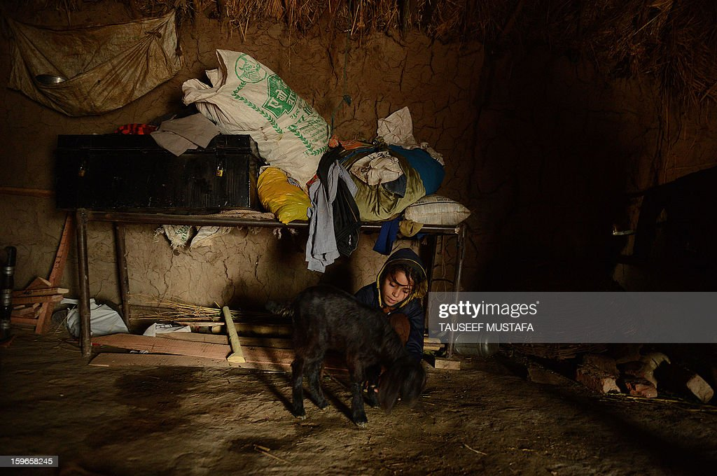 A young girl plays with a goat inside a mud house during a downpour along the India-Pakistan border in Suchit-Garh, 36 kms southwest of Jammu on January 18, 2013. On both sides of the de facto border in Kashmir, villagers living on one of the world's most dangerous flashpoints have special reason to fear the return of tension between India and Pakistan. AFP PHOTO/Tauseef MUSTAFA