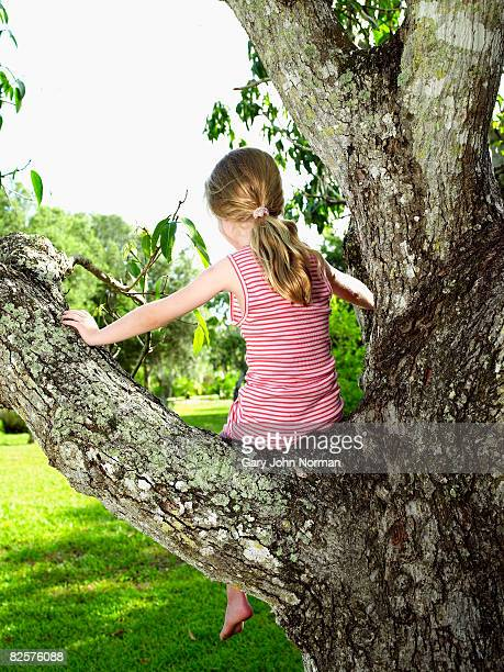 Young girl sits in tree back to camera