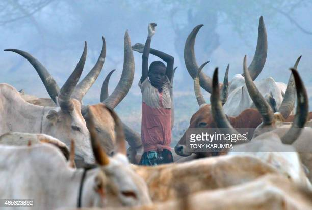 A young girl stands among head of cattle at a traditional smoky cattle camp at dawn at the town of Nyal an administrative hub in Unity state South...