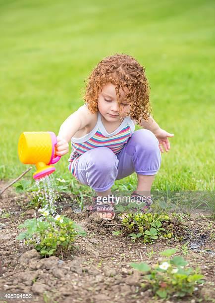 Junges Mädchen gießen Erdbeeren im Garten