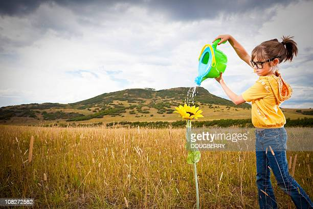 Young girl watering sunflower