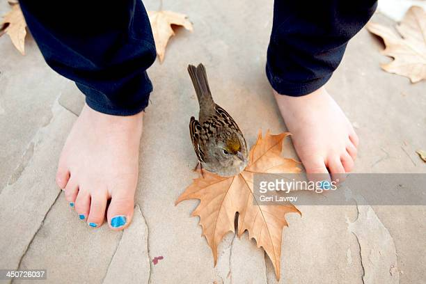 Young girls feet by a house sparrow